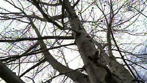 Abattage D Arbres Autorisation : edmundston pr sente son code de l 39 arbre ici radio ~ Premium-room.com Idées de Décoration