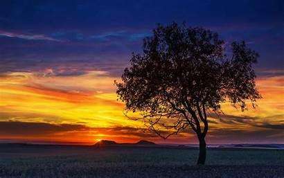 Tree Landscape Trees Celtic Sunset Meaning Ogham