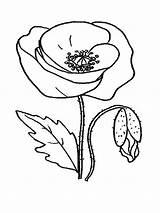 Poppy Coloring Flower Amapola Colorear Coquelicot Poppies Divertida Colour Dibujo Flowers Amapolas Template Dzieci Dla Drawing Dibujos Coloriage Maki Mohnblume sketch template