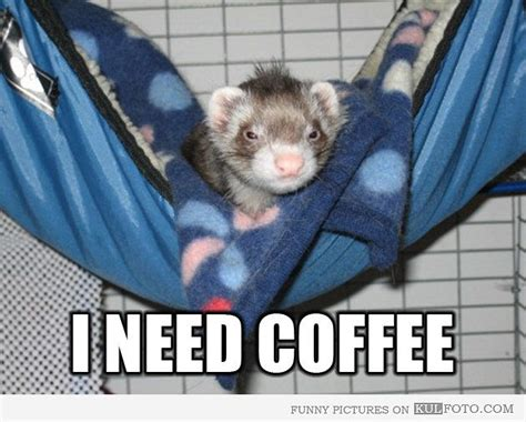 I Need Coffee Funny Pictures Blue Mountain Coffee Georgia Heb Community K Cups Breakfast Blend Executives Whole Foods Montreal Jamaican Decaf Advertisement