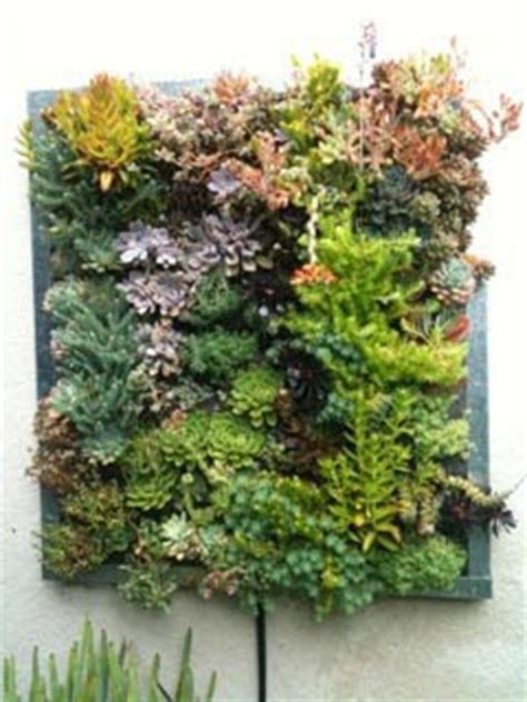 Vertical Garden Planting Panel by Plants On Walls Vertical Garden Systems Gilman Succlent