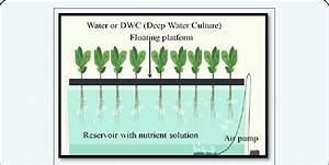 Shows The Deep Water Culture System