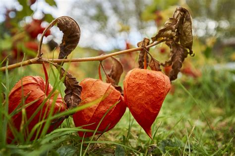 Herbstliche Deko Garten by Kreative Und Originelle Bastelideen F 252 R Herbstliche Deko