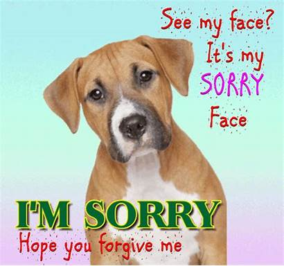 Sorry Face Card Cards Ecard Greeting Change