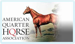 Types of Race Horses - Information on Horse Breeds