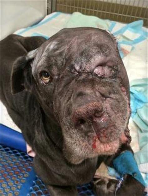 dogs massive tumor removed health news florida