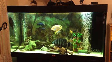 cichlid juwel 300 aquarium update