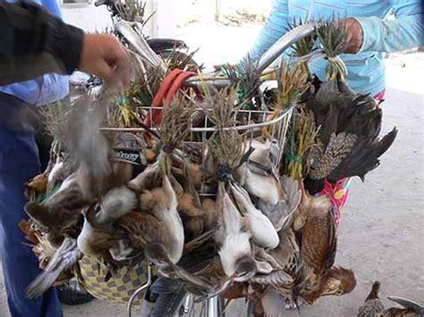Bird Trade Escalating Study Society The Latest