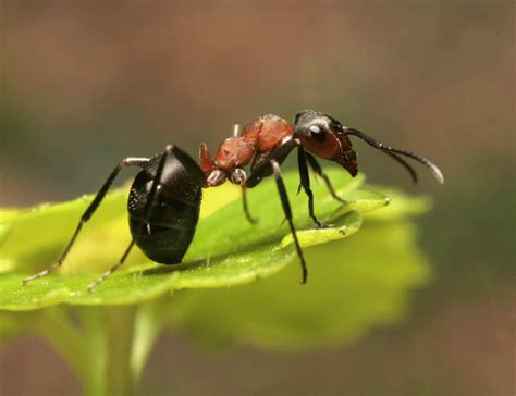 ant service lawn insects control and treatment from the experts