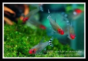 In schools, fish zone in on neighbors — Advanced Aquarist ...