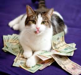money cat caterville cats make it