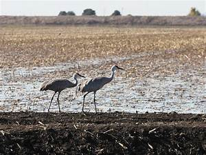 Bird-friendly Farms Catching On in California