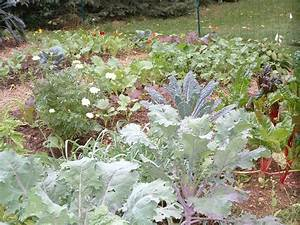 Plant A Fall Garden And Grow Veggies Far Beyond Summer