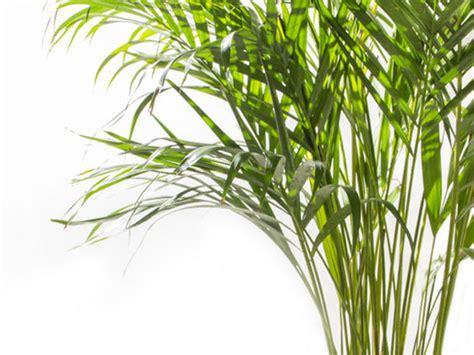 Pflanzen Im Schlafzimmer by Diese Pflanzen Solltest Du Im Schlafzimmer Haben