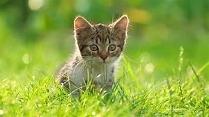 Flöhe Bei Katzen Bekämpfen : zecken und fl he bei katzen k nnen verschiedene krankheiten ausl sen ~ Orissabook.com Haus und Dekorationen