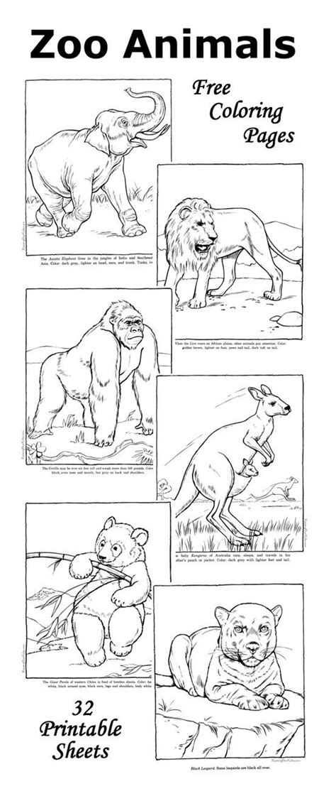 ideas  animal coloring pages  pinterest