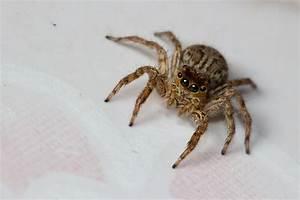 Spinnen Fernhalten Wohnung : spinnen bek mpfen die besten tipps gegen spinnen im haus ~ Whattoseeinmadrid.com Haus und Dekorationen