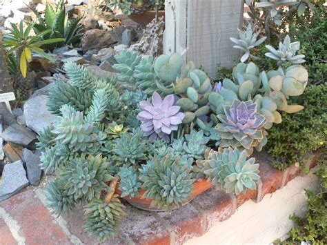 suculent garden cactus succulent garden at sherman gardens echoes