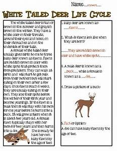 White Tailed Deer Life Cycle Reading Passage By The Techie
