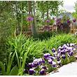 Bulbs And Pansies By Stonegate Gardens Of Denver Colorado ...