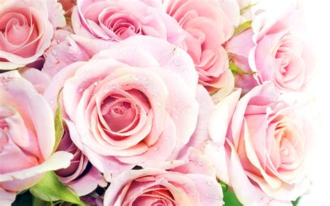 fond d écran fleur fond ecran de fleur id e d image de fleur fond d cran pc