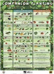 Zone 9 Gardening Calendar