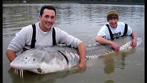 Giant Monster Lake Sturgeon - YouTube