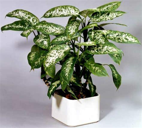 Zimmerpflanzen Die Wenig Licht Benötigen by Pflegeleichte Topfpflanzen Zimmerpflanzen Die Wenig