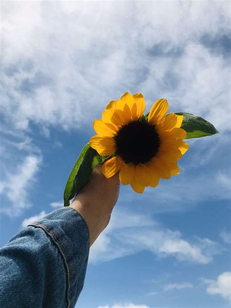 aesthetic sunflower wallpapers wallpaper cave
