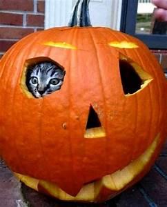 Jack O Lantern Cat Faces