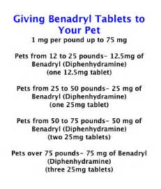 benadryl for cats benadryl dosage for cats