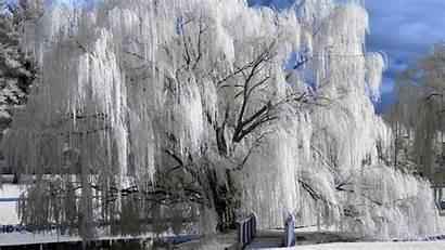 Winter Wallpapers Snow Trees Wiki
