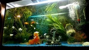 Fische Aquarium Hamburg : aquarium fische ~ Lizthompson.info Haus und Dekorationen