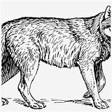 Wolf Clipart Papapishu Coloring Realistic History Sheets Seekpng sketch template