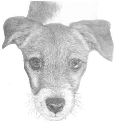drawing animals  pencil   review