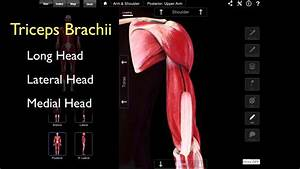102 The Posterior Compartment Of The Arm
