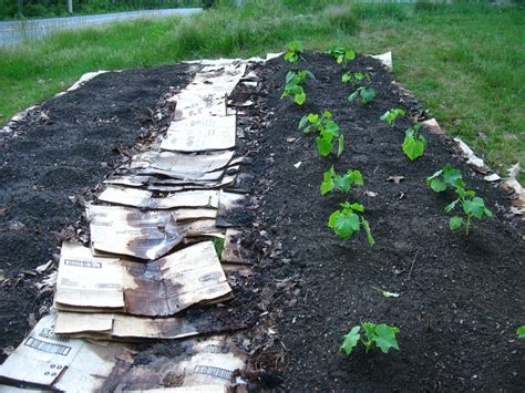 how to mulch grass lasagna gardening in 5 simple steps