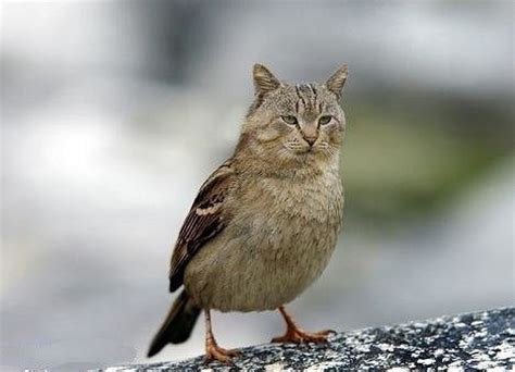 sparrow bird cat amaaaaaaaaazing animeals
