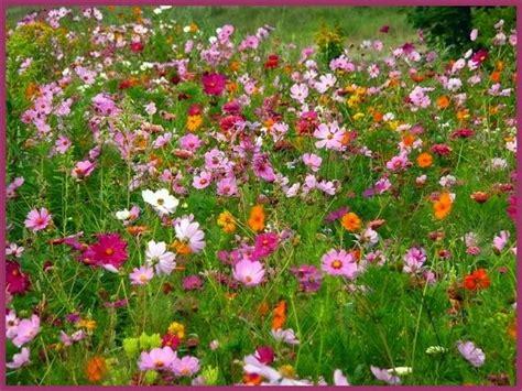 tapis de fleurs par josiane ferret sur l internaute