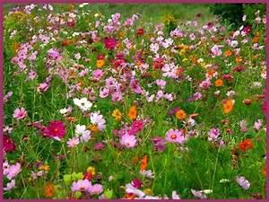 carrelage design champs de fleurs tapis moderne design With tapis chambre bébé avec bioloka champ de fleurs
