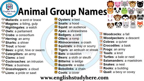 names animal animals english groups collective nouns terms its study inti revista englishstudyhere