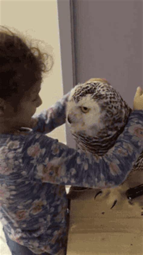 images  prove owls   cutest birds