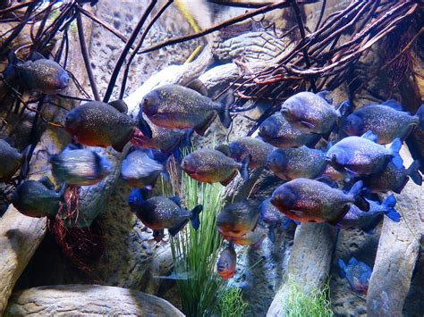 understanding water quality  aquaculture institute