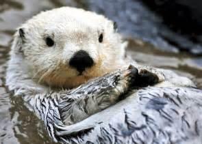Cute Otter Sea Baby Animals