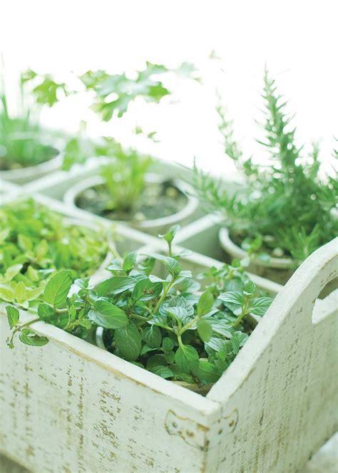 6 plants that repel insects gardening earth living