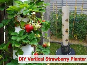 DIY Vertical Strawberry Tube Planter