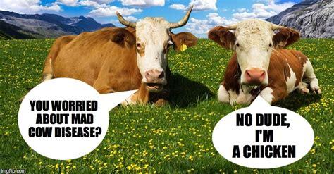 Mad Cow Disease Meme - mad cow disease imgflip