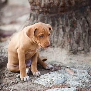 pancreatitis in dogs canine pancreatitis
