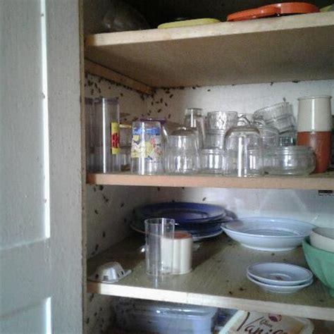 cafards cuisine eliminer des blattes ou des cafards dans la cuisine de mon restaurant sur vitrolles 13127 abaipro