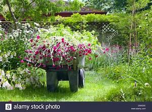 Blumen Im Garten : schubkarre voller blumen im garten stockfoto bild 57744930 alamy ~ Bigdaddyawards.com Haus und Dekorationen